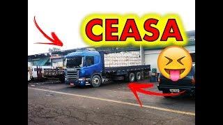 Baixar CARREGUEI FRUTA PRO CEASA! Botando Pressão no Scania #Saveiro do Rau