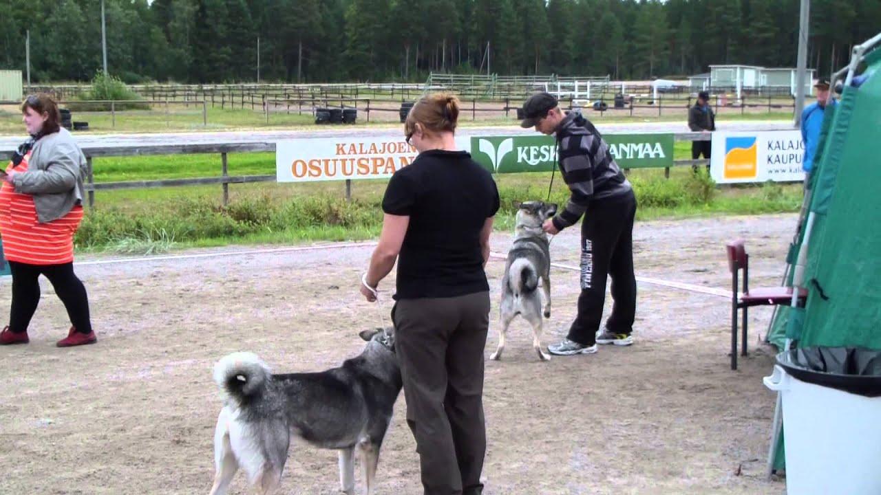 kalajoki koiranäyttely