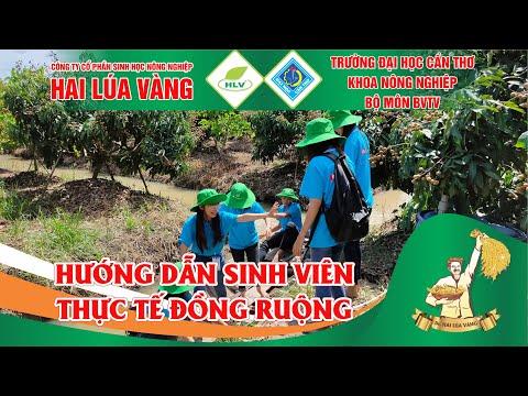 Khoa nông nghiệp Cần Thơ kết hợp Công ty Hai Lúa Vàng tổ chức chuyến thực tập thực tế đồng ruộng