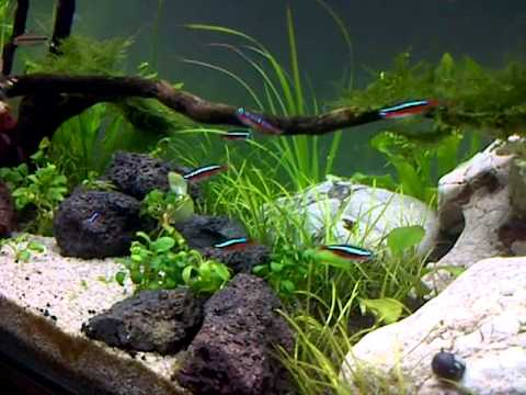 Elegant Aquascape Beginner