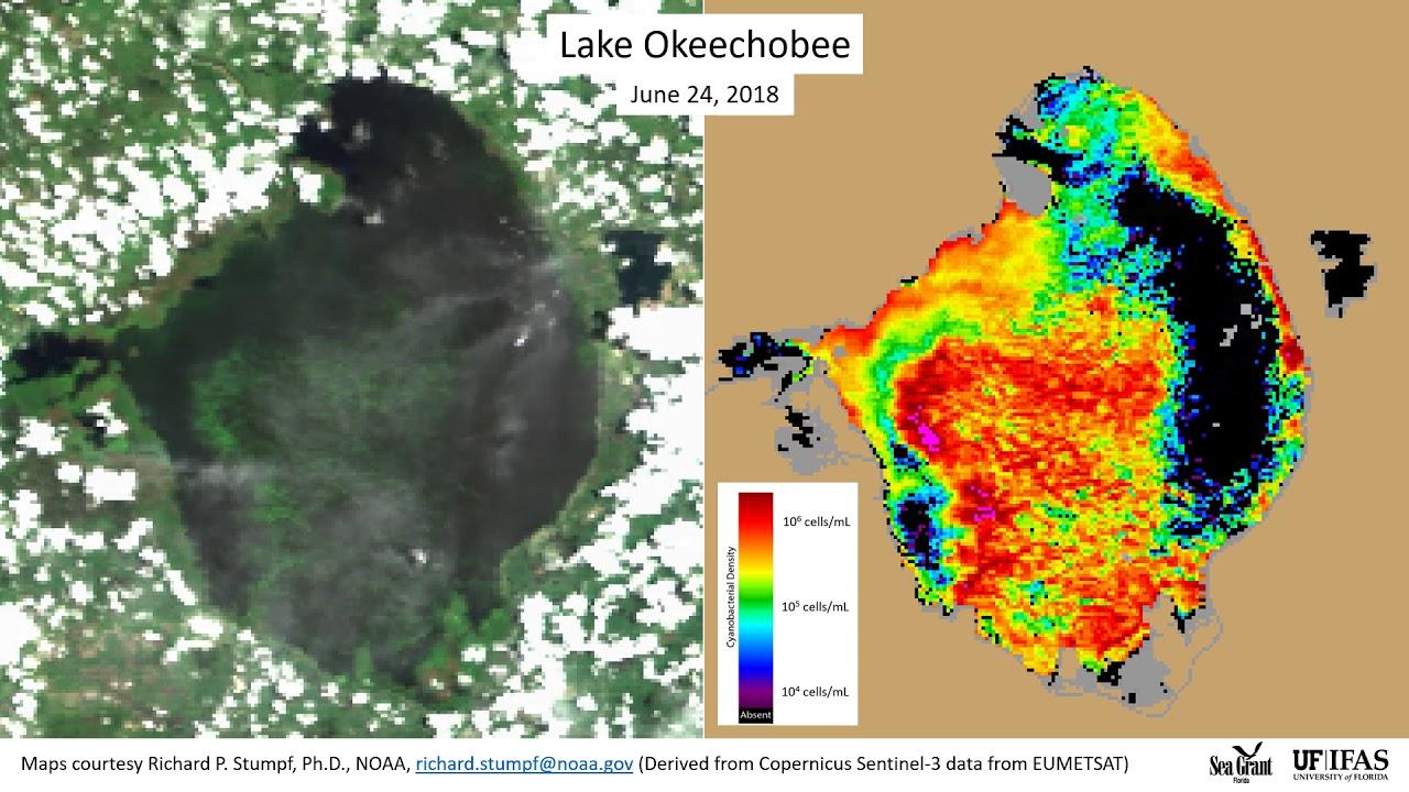 2018 Algae Bloom in Lake Okeechobee 7/18/2018   YouTube