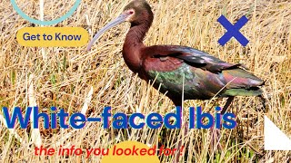 Whitefaced Ibis  breeding range extends from western       central