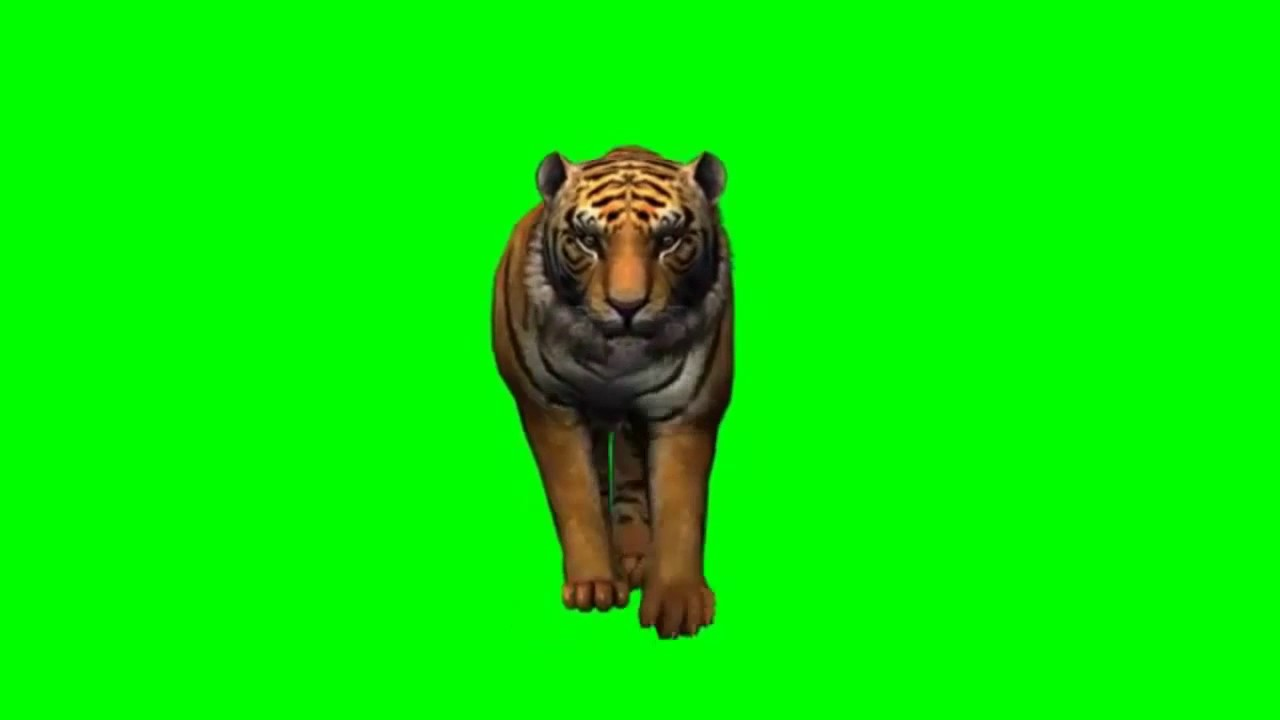green background tiger walk video for kine master - youtube