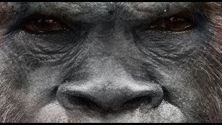 2nd biggest cover up after Flat Earth - Science of the Sasquatch