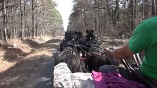 Attelage à 8 chevaux Canadien