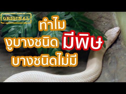 ทำไม งู บางชนิด มีพิษ บางชนิดไม่มี  รู้หรือไม่ - DYK - วันที่ 23 May 2019