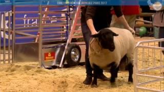 Direct - Ring ovins/caprins | Lundi 27 février Partie/2