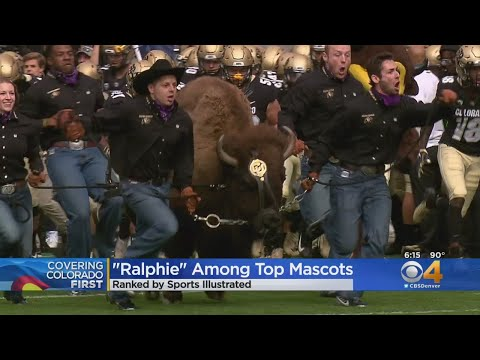BEARDO - Ralphie lands on Sports Illustrated's Top 10 College Mascots