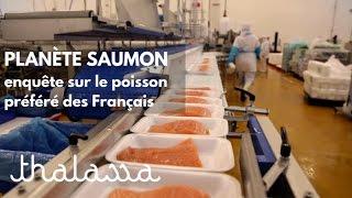 Planète saumon, enquête sur le poisson préféré des Français