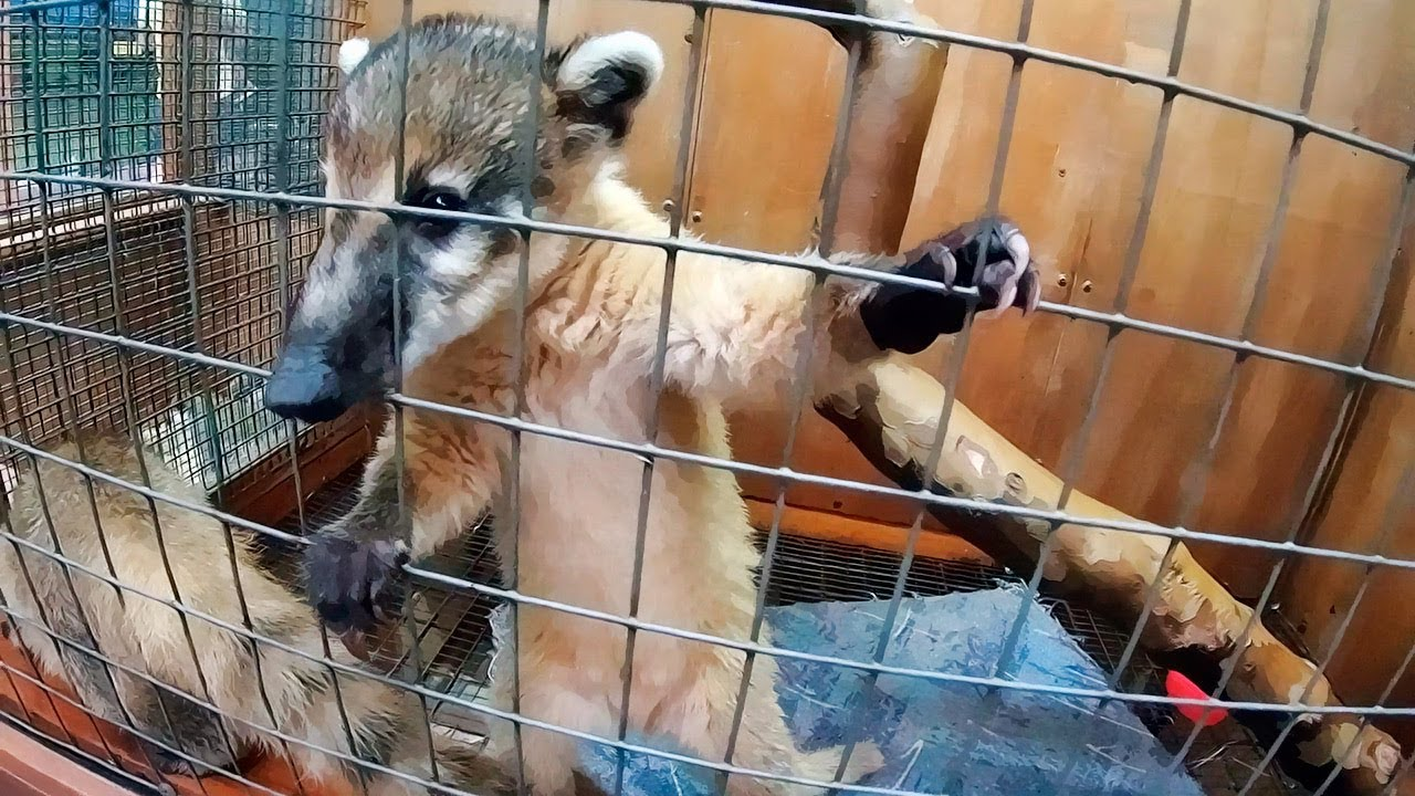 Анапа / КОНТАКТНЫЙ ЗООПАРК Мир животных