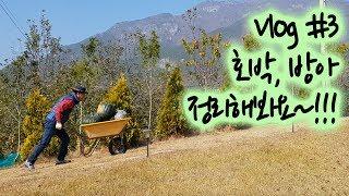 일상 Vlog #3   은퇴 후, 소소한 시골일상👨🌾 (호박/ 새소리/ 방아🌿 정리하기 )