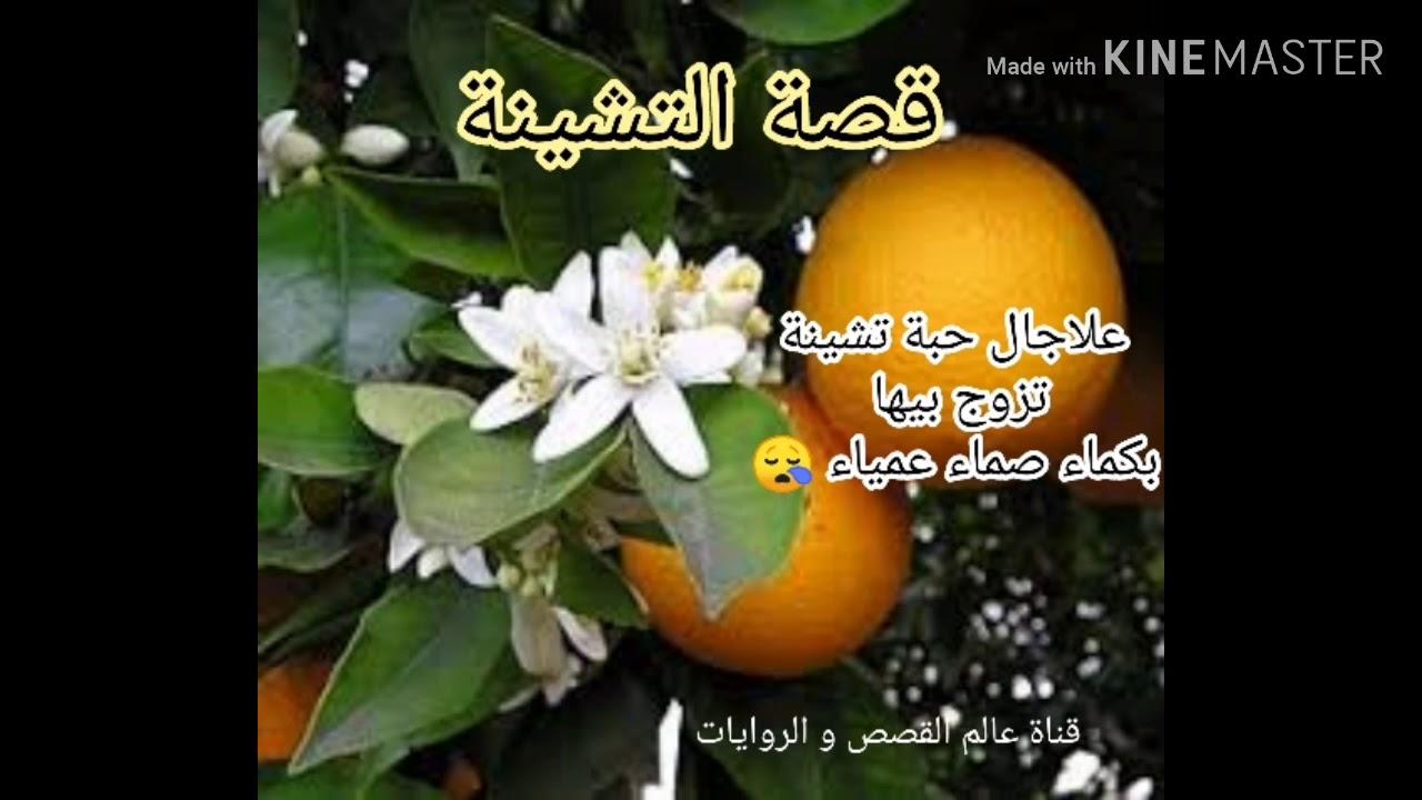 قصة التشينة من التراث الجزائري باللهجة الجزائرية