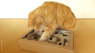 How to Make a Quick Cat Puzzle Toy
