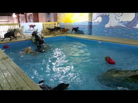Pool-Party fuer Hunde
