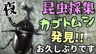 何気に今期お初のカブトムシ.