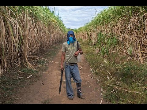 Reduce the Suffering in Nicaragua's Sugar Cane Workers