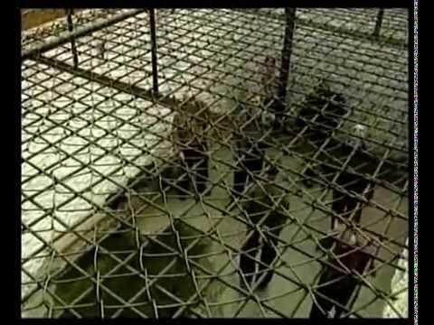 Беспредел в саратовских тюрьмах