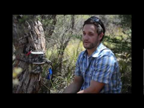 Remote sensor cameras - Protecting Corangamite's coastal biodiversity.mp4
