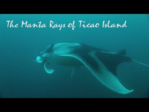 The Manta Rays of Ticao Island