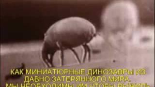 видео Клещ в подушке: живут ли клопы в подушках, как обнаружить, какой от них вред, как избавиться