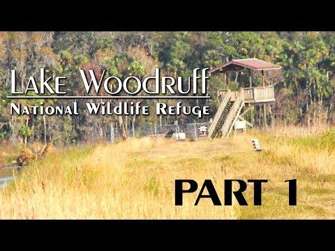 Lake Woodruff National Wildlife Refuge: Part 1