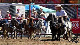 Itsy Bitsy Tiny Little Horses Chuck-wagon Racing - Ipe