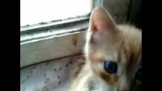 Рыжкин,который живет в окне