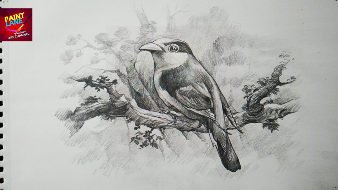 How to draw a bird with pencil drawing shading