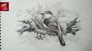 shading pencil bird drawing sketch draw birds animals drawings sketches step easy animal visit