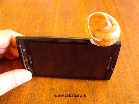 видео: Усилитель звука для мобильника из ракушки. (diy. shell phone amp.)