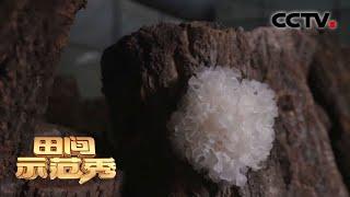 《田间示范秀》 20201104 耳堂里的保卫战 CCTV农业 - YouTube