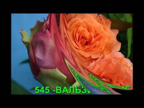 Кустовые розы. РОЗЫ ОТ ТАТЬЯНЫ.