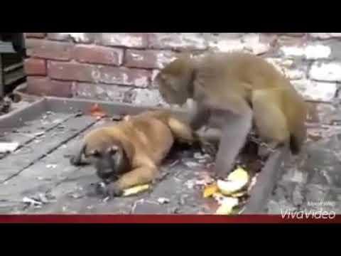Monkey and dog Punjabi dubbed