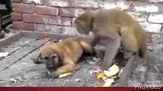Monkey and dog Punjabi dubbed