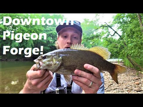 Bass Fishing DOWNTOWN Pigeon Forge!