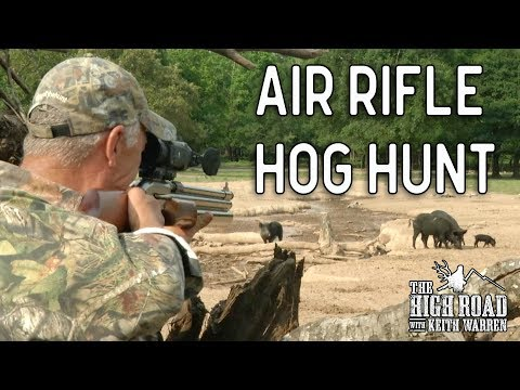 Big Bore 50 Caliber Air Rifle Hunt for Wild Boar