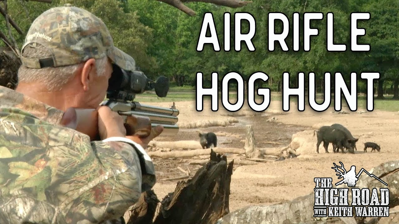 Big Bore 50 Caliber Air Rifle Hunt for Wild Boar
