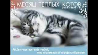 Месяц теплых котов, Позитив Жизни