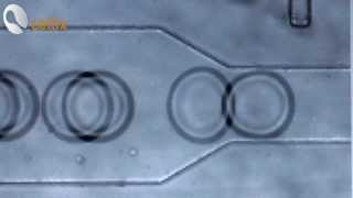 Droplet Generation with ExiGo Microfluidic Pumps