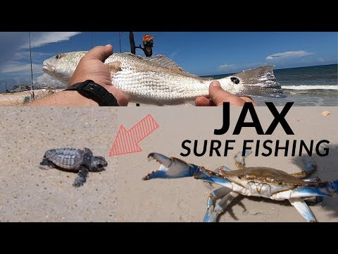 Surf Fishing Florida. How To Catch REDFISH WHITING POMPANO! Surf Fishing Jacksonville, FL!
