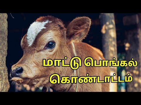மாட்டு பொங்கல் | Mattu Pongal Celebration | Tamil tradition