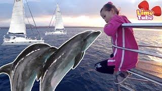 요트타고 바다에서 돌고래를 찾아라! 라임의 제주도 바다체험 놀이