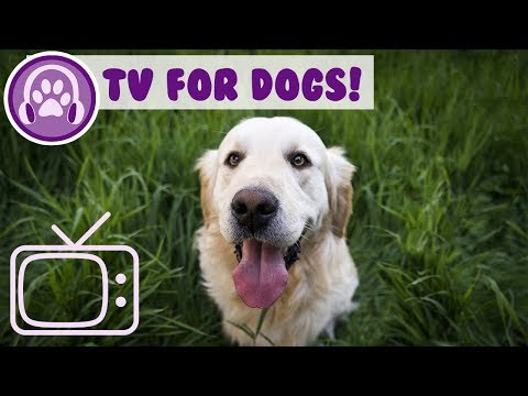 How to Calm My Dog with TV! TV for Dogs to Watch!
