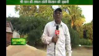 Know about SRI method of paddy cultivation