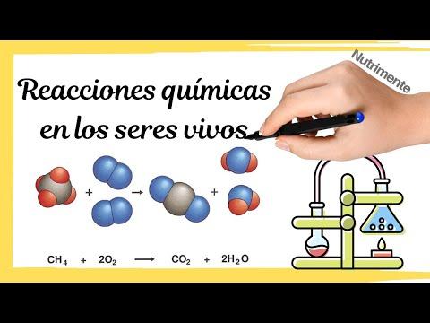 REACCIONES QUÍMICAS en los SERES VIVOS - YouTube