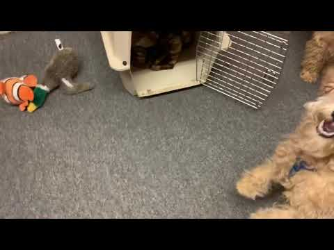 More barking at the office
