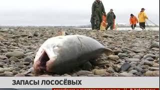 Запасы лососёвых. Новости 21/05/2018 GuberniaTV
