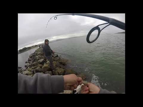 Bay Area Halibut Fishing