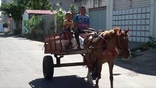 Carroças em Limoeiro do Norte, sua história e meio de sobrevivência de muitos