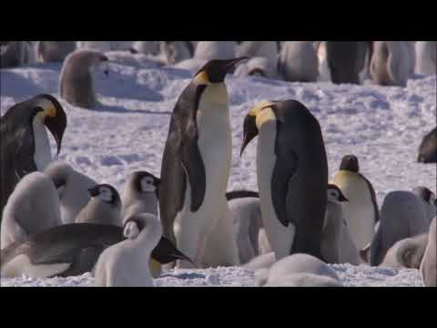 Penguin Day: A Family Story by Nic Bishop